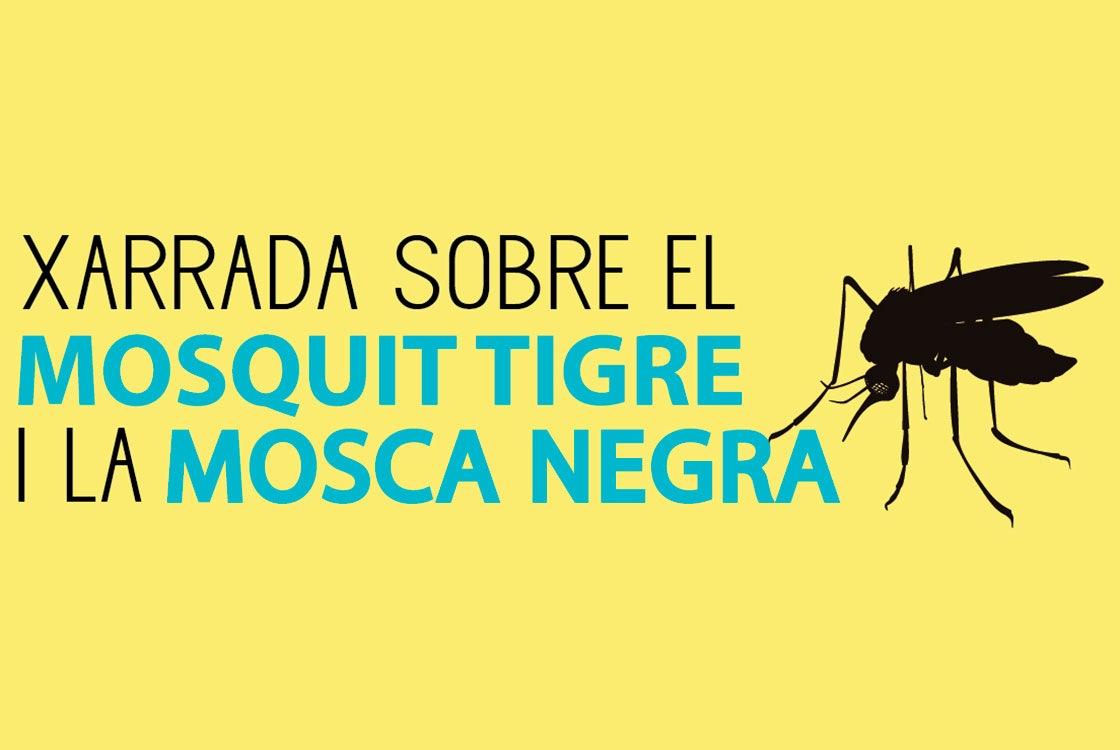 xarrada mosquit 11072019 2 - Alzira Radio notícies d'Alzira