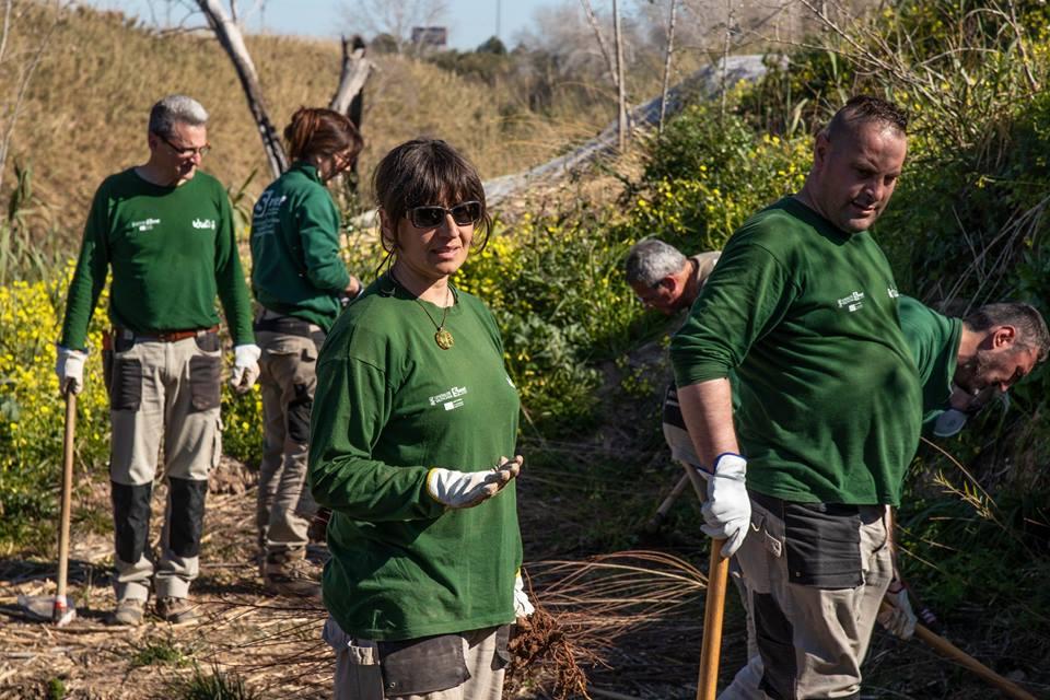 Idea plantació arbres - Alzira Radio notícies d'Alzira