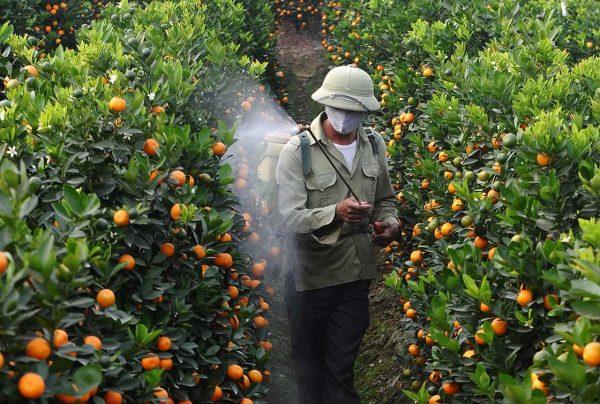La Unió de Llauradors analitza fruita de Sud-àfrica i Mercosur amb restes de pesticides prohibits