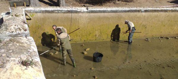 Retiren les carpes exòtiques de les basses del Monestir de la Murta