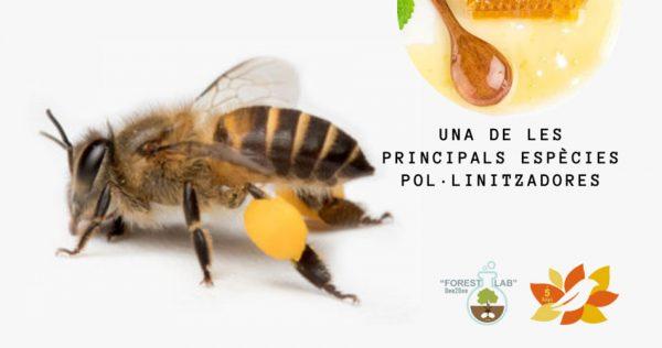 Este cap de setmana, més activitats amb les abelles